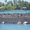 Five private homes are along the coast, but the abundance turtles are much more prominent. - Kīholo State Park Reserve