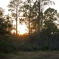The sun descends.- Price's Scrub State Park