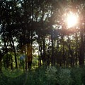 Late afternoon sun peering through the trees.- Konza Nature Preserve