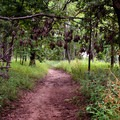 The park offers 22 miles of hiking and biking trails.- Indian Cave State Park