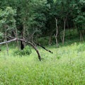 The forest and meadows surrounding the trails in Indian Cave State Park.- Indian Cave State Park