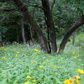 Wildflowers are on display in the spring and summer.- Indian Cave State Park