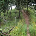 One of the well maintained trails in Indian Cave State Park.- Indian Cave State Park