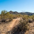 The trail is shared by horseback enthusiasts, mountain bikers, hikers, and wild horses!- Wild Horse Trail