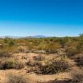 Desert views.- Wild Horse Trail