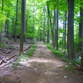 Patriot's Path with tulip poplars.- Cooper Gristmill to Kay's Cottage via Patriot's Path