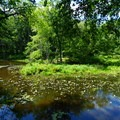 Pond along Black River.- Cooper Gristmill to Kay's Cottage via Patriot's Path