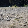 The boat ramp is rocky; four-wheel drive isn't necessary, but it will help.- John Day River: Service Creek to Clarno
