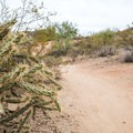 Watch out for cacti!- Hawes Trail Network