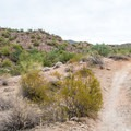 Several short climbs and dips in the trail make for an exciting ride.- Hawes Trail Network