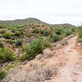 Some sections of the trail become narrow and technical.- Hawes Trail Network