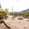 A variety of cacti sit beside the trail.- Hawes Trail Network