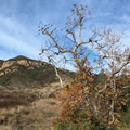 Typical vegetation and views along the trail.- Black star canyon to Beek's place