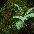 A small fern grows out of an old, rotten log that's covered in moss. - Shining Rock via Big East Fork