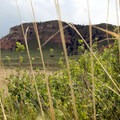 Crown Rock peering out from behind the prairie grasses.- Scottsbluff National Monument