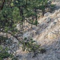 Group of deer along the Anemone Trail.- Anemone + Mount Sanitas Loop Trail