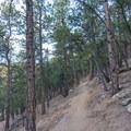 Lions Lair Trail.- Anemone + Mount Sanitas Loop Trail
