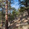 Further up on Lions Lair.- Anemone + Mount Sanitas Loop Trail