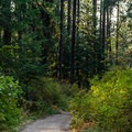 The trail toward the top of the hike.- Kamiak Butte County Park
