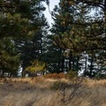 Plateau at the top of the trail.- Kamiak Butte County Park