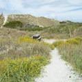 Campsites among the dunes.- Bear Island Beach Campsites