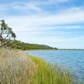 Most of the shore is salt grass.- Huggins Island Water Trail