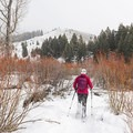 Walking through the willow chutes.- North Fork Snowshoe