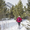 Snowshoeing up the canyon.- North Fork Snowshoe
