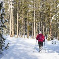 Soon you enter a tight forest of pine trees. - Galena Lodge Snowshoe