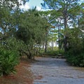 One of the shaded campsites.- T. H. Stone Memorial St. Joseph Peninsula State Park Campground