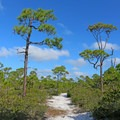 Trails weave through the trees.- T. H. Stone Memorial St. Joseph Peninsula State Park Campground