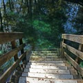 Stairs lead into the water.- Madison Blue Springs