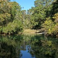 View of the Manatee Springs basin.- Manatee Springs State Park