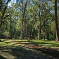 Picnicking opportunities abound in the grassy areas of the park.- Manatee Springs State Park