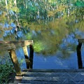 Stairs lead into the water.- Manatee Springs State Park