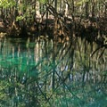 Spring holes within the park.- Manatee Springs State Park