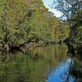 The spring outfall leads to the Suwannee River. - Manatee Springs State Park