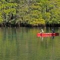 Paddlers can launch within the park.- Manatee Springs State Park