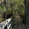 A 300-yard boardwalk leads to the river.- Manatee Springs State Park