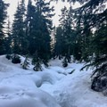 One of the handful of meadows along the 5-kilometer out-and-back trail.- Dog Mountain Snowshoe