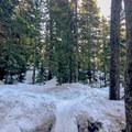Snow bridges dot the trail.- Dog Mountain Snowshoe