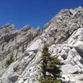 A good view going up the ridge.- Mount Lady MacDonald: East Southeast Ridge
