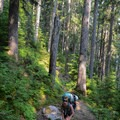 Cerise Creek hiking.- Mount Matier: North Face