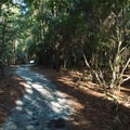 The children's nature trail near the visitor center.- Hammocks Beach State Park