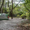 Tent camping at Carolina Beach.- Carolina Beach State Park Campground