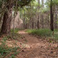 Trails lead from the campground to connect with the visitor center, beach, and other trails.- Carolina Beach State Park Campground