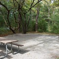 Typical tent site at Carolina Beach.- Carolina Beach State Park Campground