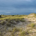 Sand dunes on Shackleford Banks are where you're likely to see horses.- Shackleford Banks