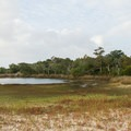 These brackish marshes near the beach are good birdwatching spots.- Shackleford Banks