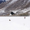 Dogs love it here, but they are still getting used to seeing fat bikes!- Durrance Loop Fat Bike